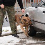 Pies Straży Granicznej doprowadził funkcjonariuszy do posiadaczy marihuany