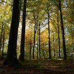 Lasy Państwowe otwierają się na miłośników survivalu i bushcraftingu. Sprawdź, gdzie wyznaczono strefy na Warmii i Mazurach