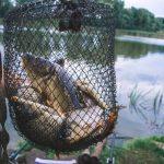 """""""Upały i wysoka temperatura wody to poważne zagrożenia dla ryb"""". Na Mazurach trwa krajowa konferencja rybacka"""