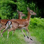 """Leśnicy i drogowcy wspólnie zbudują """"zielone mosty"""" dla zwierząt"""