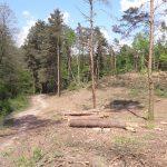 Policja zajmuje się sprawą wycinki drzew nad jeziorem Podkówka