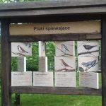 Trwa okres lęgowy ptaków. W ełckim parku słychać 25 śpiewających gatunków