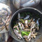 Policja oraz inspekcja sanitarna badają przyczyny  zatrucia rzeki Dzierzgoń