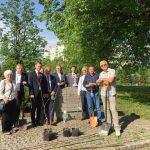 Olsztyńscy działacze PiS posadzili dęby w rocznicę uchwalenia Konstytucji 3 Maja