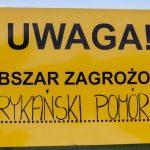 Rząd zajmie się kwestią budowy płotu chroniącego przed dzikami z ASF