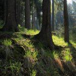 Zbierali grzyby i zgubili się w lesie. Na pomoc przybyli funkcjonariusze Straży Granicznej