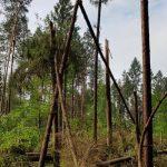 Trąba powietrzna zniszczyła las koło Starych Jabłonek