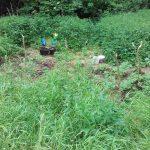 Dwaj bracia uprawiali konopie indyjskie w lesie koło Olsztyna