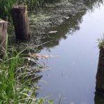 Naukowcy z UWM zbadali sprawę śnięcia ryb w rezerwacie koło Bisztynka
