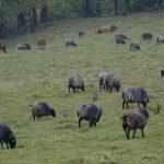 Rolnicy liczą straty wyrządzone przez dzikie zwierzęta. Szkody oszacowano na ponad 9 mln złotych