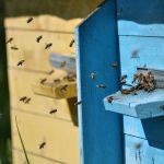 Zapraszają owady do miast. Pięć samorządów z Warmii i Mazur zadba o obecność pszczół