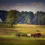 Gospodarstwo agroturystyczne z okolic Młynar wyróżnione przez Polską Organizację Turystyczną