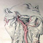 """Theatrum anatomicum"" w muzeum Kopernika"
