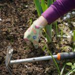 Prezydent Ełku zapowiada: W dwa tygodnie posadzimy 300 drzew