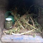 Handlowali narkotykami o wartości 20 tys. złotych. Krzaki konopi ukryli w psiej budzie