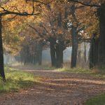 W Elblągu wycinają stare drzewa, by móc posadzić nowe. Trwa akcja odnawiania drzewostanu w Parku Planty