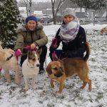 """Tłumy biegaczy i szczęśliwe psy. Huczne świętowanie jubileuszowego """"Biegu na 6 łap"""""""