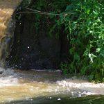 Prezes Polmleku oskarżony o zanieczyszczenie rzeki Łyny. Prokuratura potwierdza: sprawa trafiła do sądu