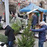 O chooooinka! 100 darmowych drzewek trafiło do słuchaczy Radia Olsztyn