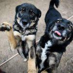 Bezpłatne czipowanie psów w Giżycku