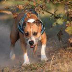 Wyższe kary dla nieodpowiedzialnych właścicieli psów