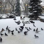 """""""Podczas opadów śniegu codziennie na olsztyńskie ulice ląduje około 70 ton soli"""". Mieszkańcy skarżą się na stan dróg i chodników"""