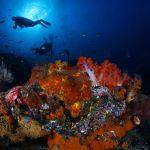 Podwodny świat w obiektywie Alicji i Janusza Dramińskich