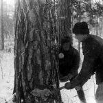 IPN szacuje, że wysiedlono prawie 800 tysięcy osób. Mija 79. rocznica masowych deportacji na Syberię