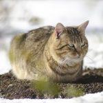 Silne mrozy zagrażają także zwierzętom. Najbardziej narażone są te bezpańskie