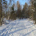 Zgubili się w lesie. Wychłodzonym nastolatkom pomogli policjanci z Ełku