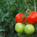 Wiosna za pasem. Co zrobić, żeby cieszyć się zdrowymi warzywami z własnego ogródka?