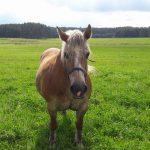 Konie – wyjątkowe zwierzęta
