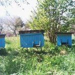 """W Elblągu pojawią się miejskie ule. """"Pszczoły są dużo bezpieczniejsze w mieście, niż na terenach wiejskich"""""""