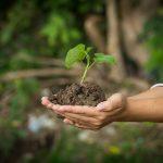 Zbiórka makulatury sposobem na ratowanie lasów. Liga Ochrony Przyrody zaprasza do udziału w konkursie