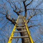 Chwila radości i wielki strach. Ratownicy pomogli nastolatkowi, który bał się zejść z drzewa