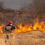 Plaga pożarów traw i trzcinowisk w powiecie elbląskim. Nie wszystkie są wynikiem celowych podpaleń
