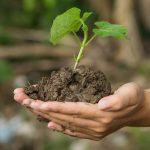 """Leśnicy potrzebują pomocy przy sadzeniu prawie 20 milionów młodych dębów. """"Nauczymy każdego, jak sadzić las"""""""