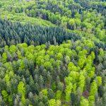Szansa na negocjacje w sprawie wyrębu lasu nieopodal olsztyńskiego lotniska. Aeroklub chce ograniczyć planowaną wycinkę