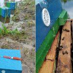 Utopił sześć uli i 120 tysięcy pszczół. Policja złapała sprawcę