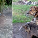 Wyprowadziła się porzucając psa z wrośniętym kagańcem. To kolejny przypadek znęcania się nad zwierzętami w tym roku