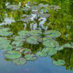 Pijany 36-latek kąpał się w jeziorku w centrum Kętrzyna. Mieszkańcy zaalarmowali policję