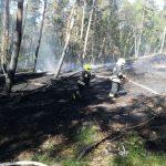 Strażacy gasili ponad 90 arów ściółki w lasach na Mierzei Wiślanej. Z powodu upałów rośnie zagrożenie pożarowe
