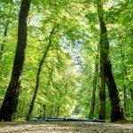 """Susza w lasach daje się we znaki. """"Aby sytuacja uległa poprawie, musiałoby padać przez 2 miesiące"""""""