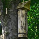 Pszczoły znalazły dom w elbląskich lasach. Wszystko dzięki zawieszonej rok temu kłodzie bartnej