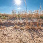 Susza, przymrozki, grad, a nawet piorun. Zjawiska atmosferyczne wyrządziły szkody w uprawach, rolnicy składają wnioski