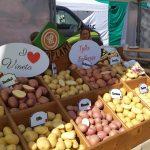 Krajowe Dni Ziemniaka przyciągnęły do Siemiątek tysiące odwiedzających