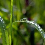 Tegoroczne żniwa pod znakiem deszczu. Dotychczas zebrano niecałe 35% plonów
