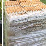 W lesie pod Olsztynem znaleziono kilka tysięcy jaj.  Rozpoczęły się poszukiwania właściciela