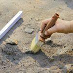 Archeolodzy szukają cmentarzyska Wikingów. Prace koło Elbląga poprzedziły badania georadarem