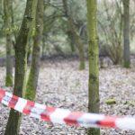 66-latek został przygnieciony przez drzewo. Mężczyzna zginął na miejscu